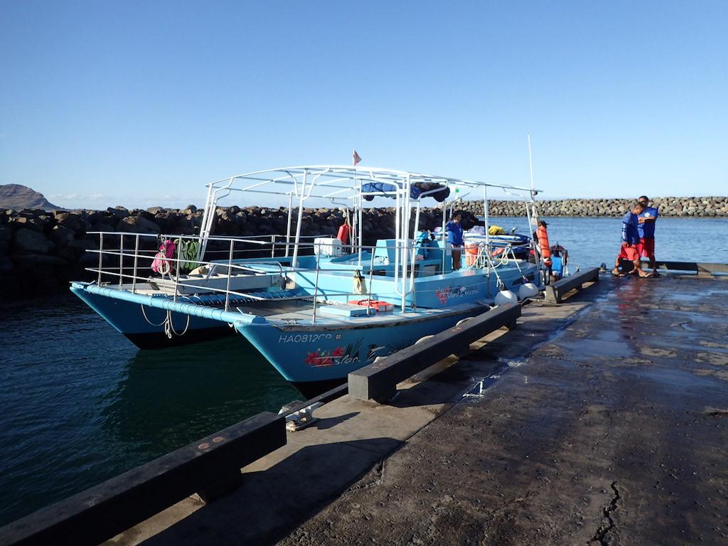 名門イルカ大学ボート