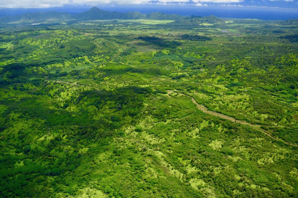 リフエ・コロア森林保護区